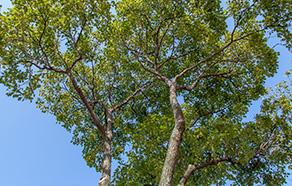危険木の伐採工事など「単体工事」もお任せ下さい!